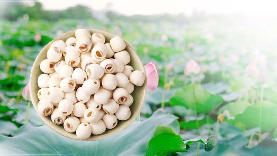 công dụng của hạt sen với sức khỏe